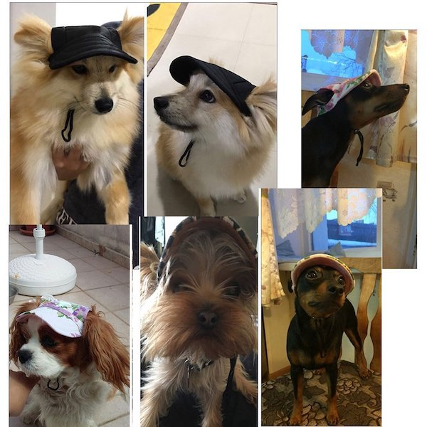 TailUp dog hats
