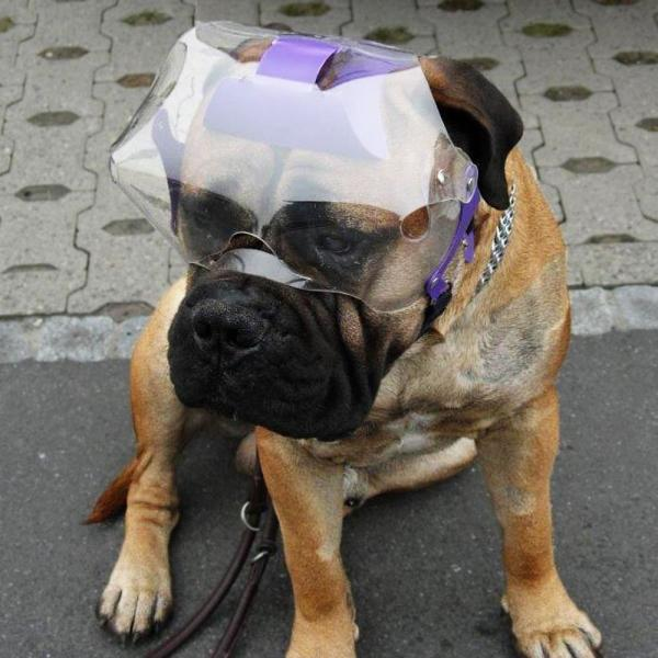 OptiVisor Eye/Face Protector For Short-Snouted Dogs