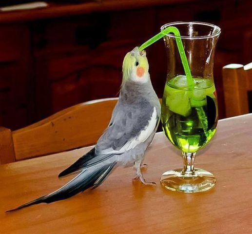 Imbibing Bird (Image via World Fashion)