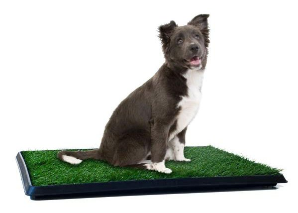 5+ Best Indoor Doggy Potty Solutions To Free You From The Leash ...