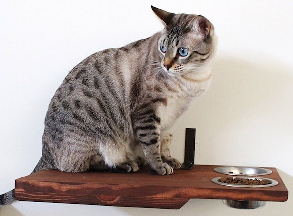 CatastrophiCreations Cat Dining Table Wall-Mounted Feeder Shelf