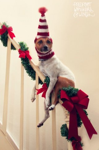 Christmas Decorating Dog (Image via Padfoot Whiskers & Wings)