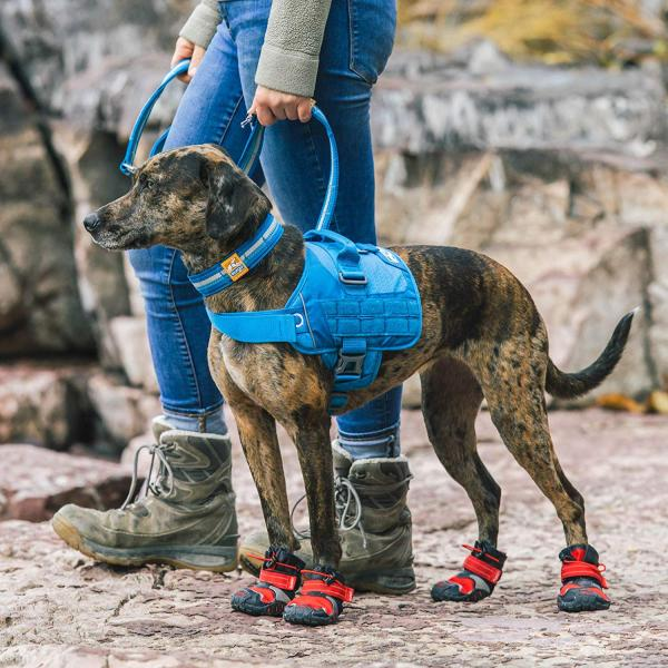 RSG Dog Townie Harness