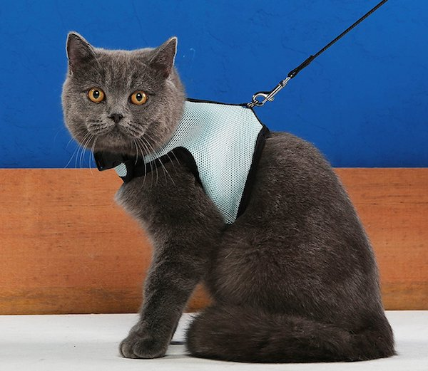 Niteangel cat harness with leash