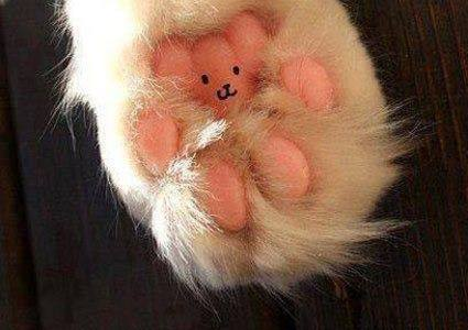 Teddy Cat's Paw (Image via 94.7 Hits)