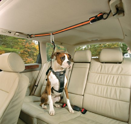 Kurgo Zip Line attached hand bars on both sides of rear seat.: © Kurgo Products