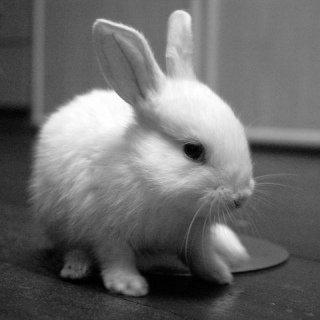 Amber The Rabbit: Image by Ke Wynn, Flickr