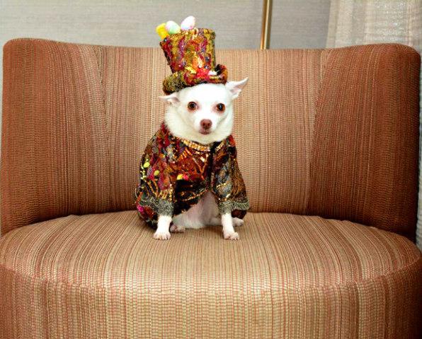 Designer Doggy Duds: Anthony Rubio Designs (image via Anthony Rubio Facebook)