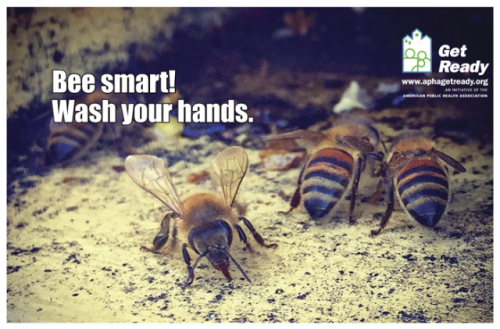 Bees: Photo by Jonathan Forte, APHA's Get Ready campaign