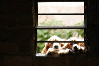 At the Window: Image by Claudio Matsuoka, Flickr
