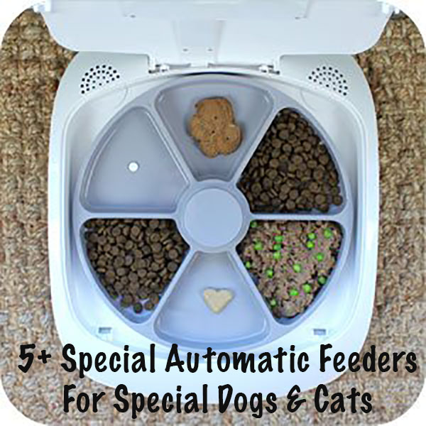 5+ Automatic Feeders For Special Dogs & Cats