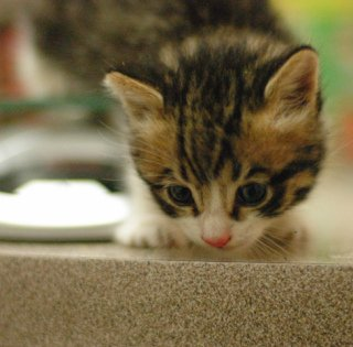 Basement Kitten on Bench: Image by Latch.r