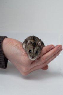 Bebop De Hamster: Image by Maarten Dirkse, Flickr