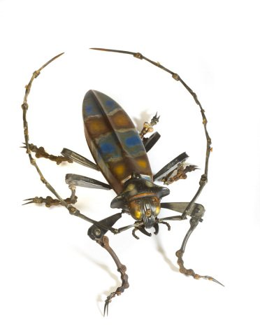 Beetle Art by Martinet: A blue and yellow beetle by Martinet. He has also made green beetles and Lady Bugs, which are also a beetle.