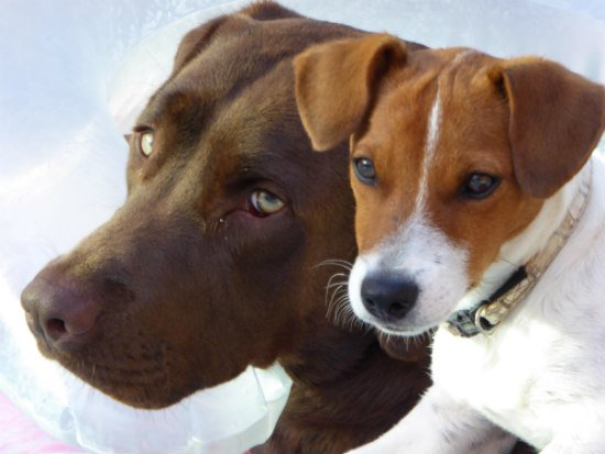 Boarding Pets of Various Ages & Sizes: Older dogs & puppies require different care