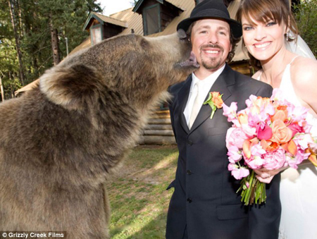 Brutus the Grizzly Bear: Source: Dailymail.co.uk
