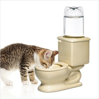 As you can see, cats can use the CSB Dog Toilet Bowl as well