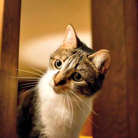 Cats are Curious by Nature: Help your cat fight off boredom and depression