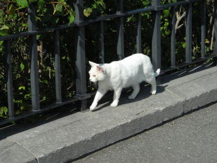 Thumbelina, One of the Parliamentary Cats (Public Domain Photo)