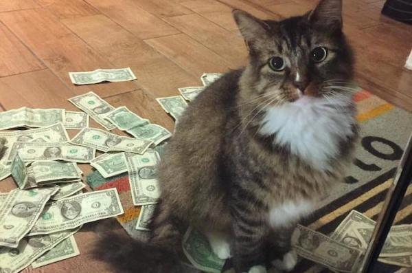 CashNip Kitty And His Loot