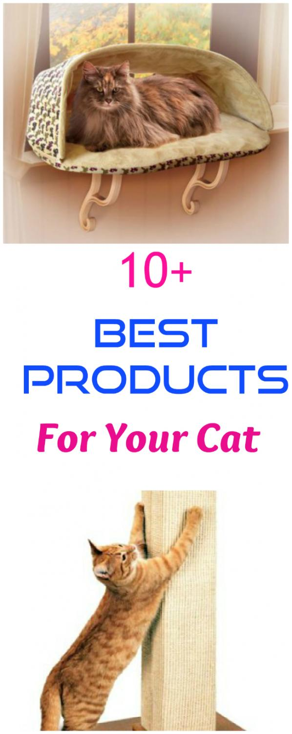 Best Products For Your Cat
