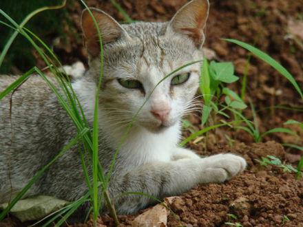 Cat (Public Domain Image)