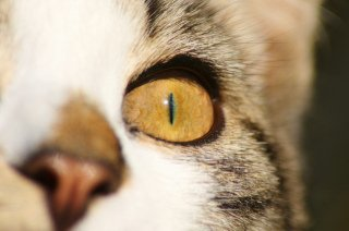 Cat Eye Close Up: Image by Felinest, Flickr