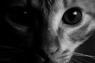 Cat Eyes by Tonyarrj, Flickr: Cat Eyes by Tonyarrj, Flickr