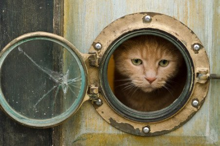 Cat Porthole: Image by Louise Lakier, Houzz