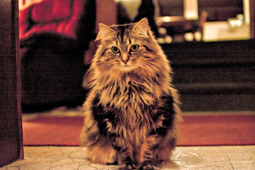 Author of 'How To Speak Cat' Gives Surprising Insight Into Feline Personalities: Cat's coats can influence their personality