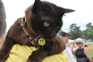 Pets Day Out: Image by Mosman Council, Flickr