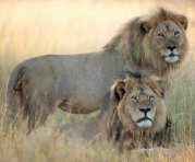 Cecil and Brother Jericho