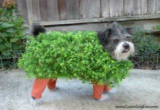 Chia Pet Halloween Dog: Image by Stacie Tamaki, The Flirty Blog