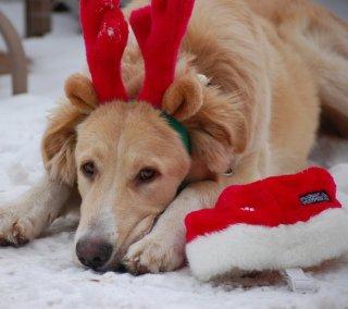 Christmas Dog: Image by SadieHart, Flickr