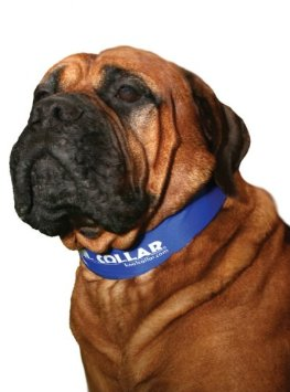 TheKool Collar