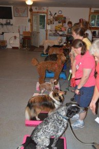 DSA training class: image via dogscouts.org