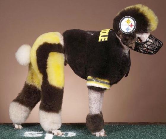 Football player poodle cut: image via freefantasyfootballpicks.com
