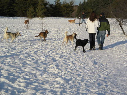 "Dogs Enjoying Themselves ""Off-Leash"" (Photo by sarah n/Creative Commons via Wikimedia)"