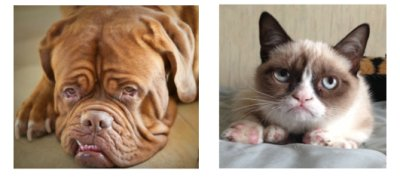 Dogue vs Grumpy!