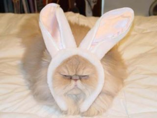Persian Cat With Easter Bunny Ears: Source: HerCampuslife.com