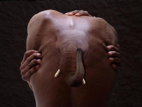 Elephant Man by Ossowski: A tatoo? A mutant? Animal art of Ossowski