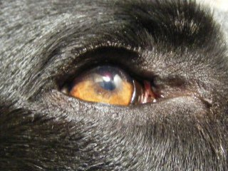 Eye: Image by Dave McLear, Flickr