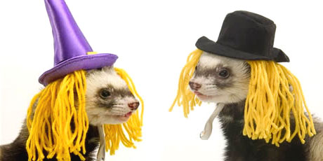 """""""Darn, they forgot to give us our brooms!"""""""