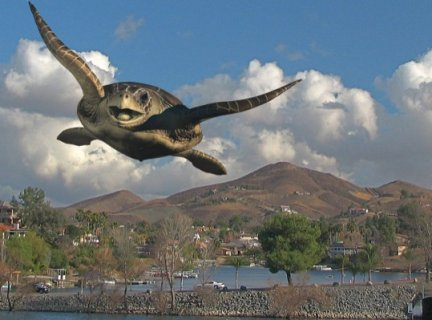 "Flying Turtle photo from the ""Friday Flyer"""
