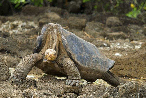 Lonesome George, Arturo de Frias Marques