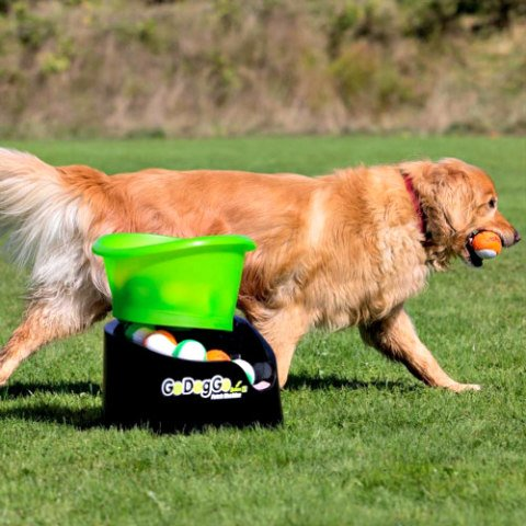 Fetching Machines for Dogs: Dog playing fetch with automatic ball launcher