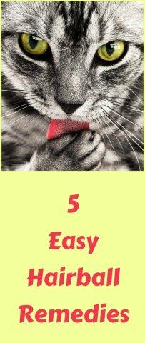 Best Cat Food To Prevent Shedding