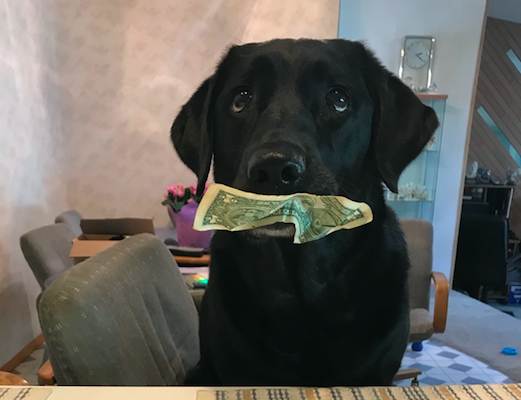 dog steals money for treats