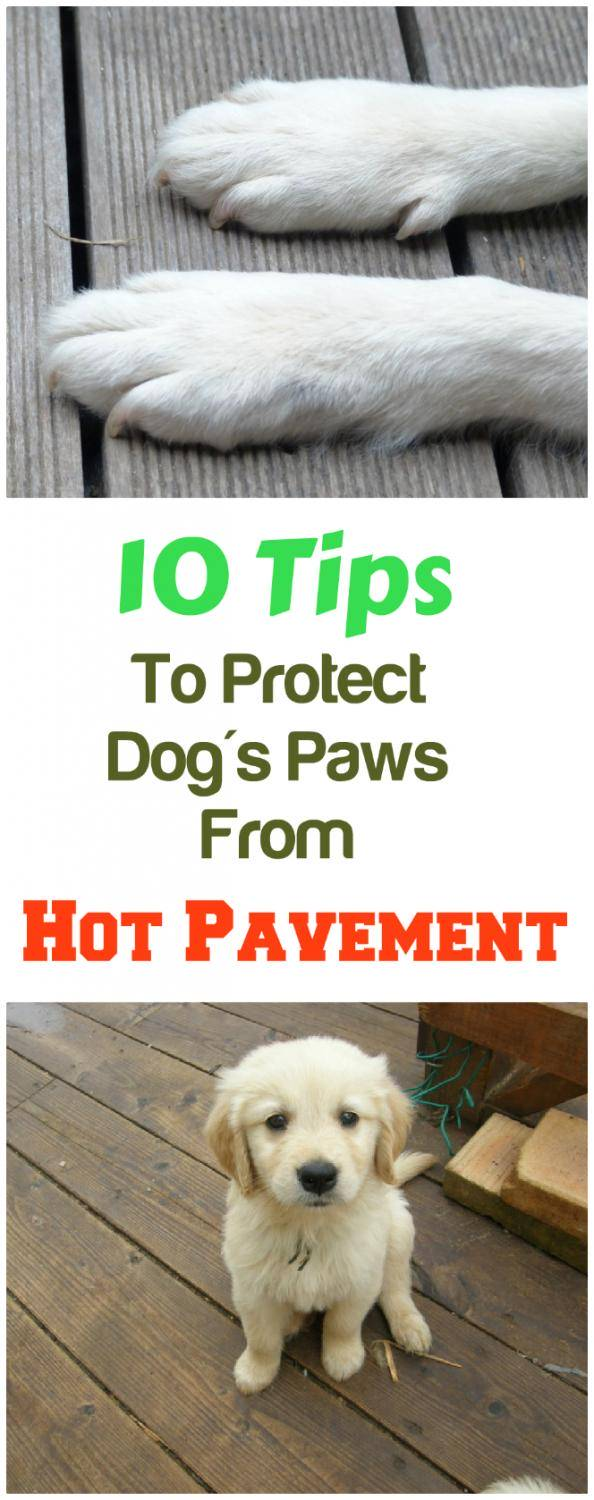 10 Tips To Protect Your Dog's Paws From Hot Pavement