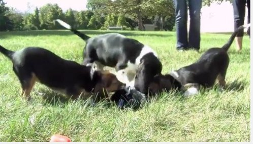 World's First IVF Puppies Born at Cornell University: Images of IVF puppies via YouTube Screen Shot